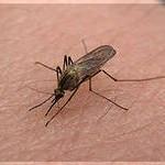 укус комаров